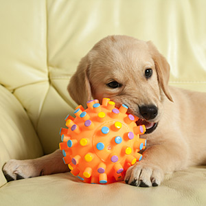 Thermoplastics in Pet Products