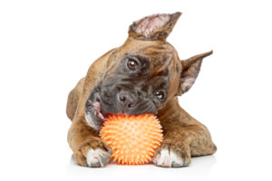 TPE for Pet Toys